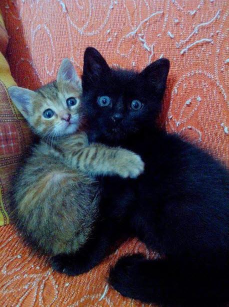 black and ginger kittens