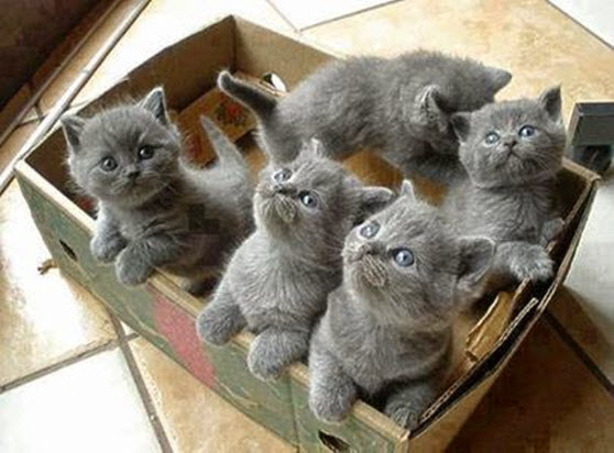 box of kittens 2