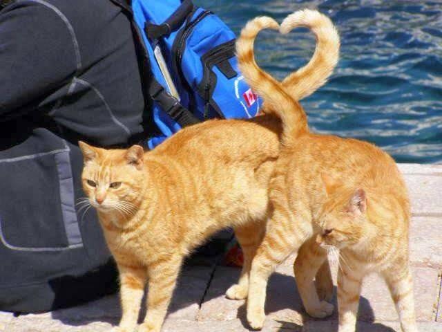ginger heart