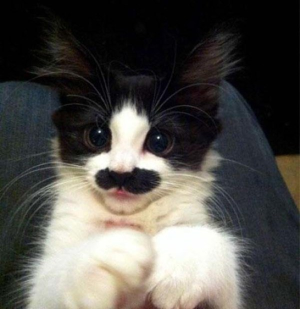 Fabulous Moustaches