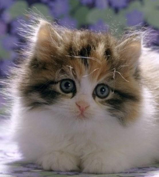cutest fluffy