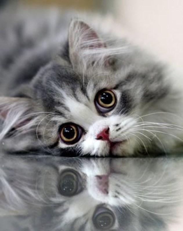 big eyes copy