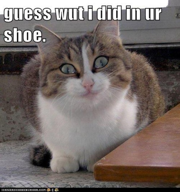 did in your shoe