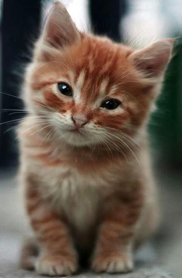ginger kitten 3