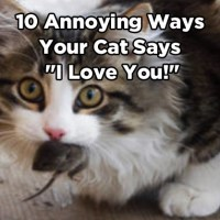 "10 Annoying Ways Your Cat Says ""I Love You!"""