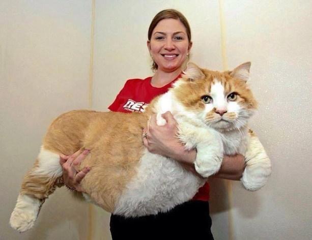 big  fat cat