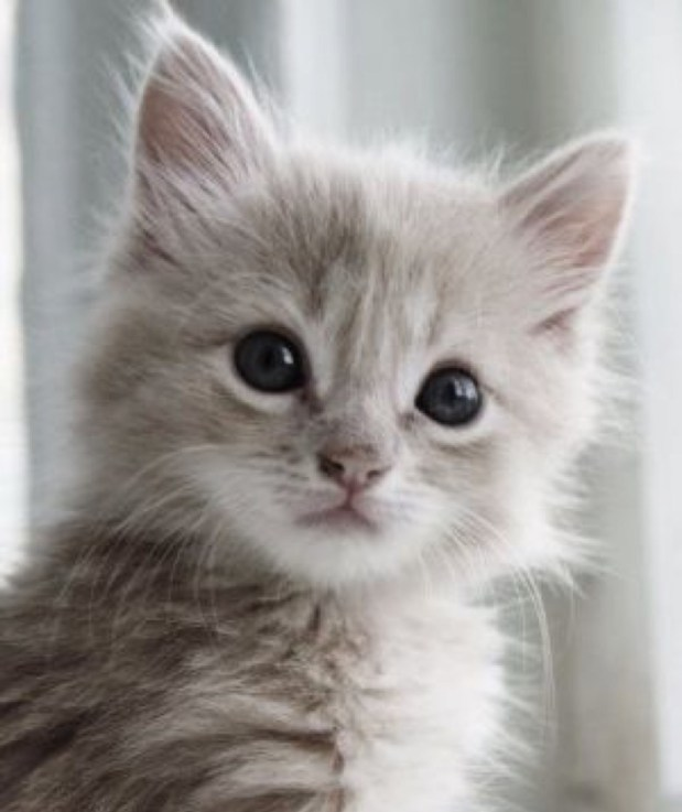 cute kitten copy