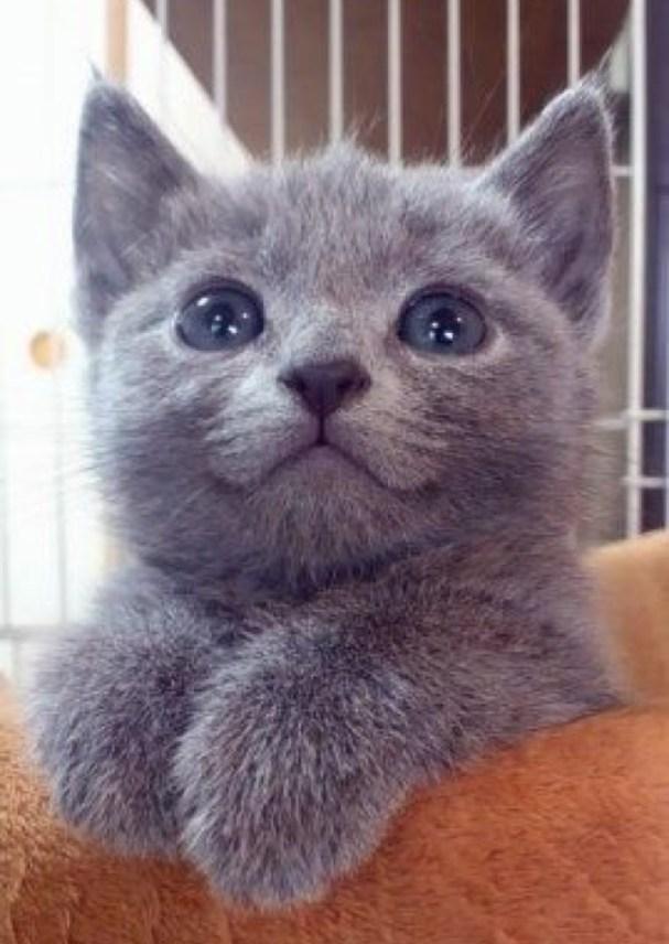 happy grey