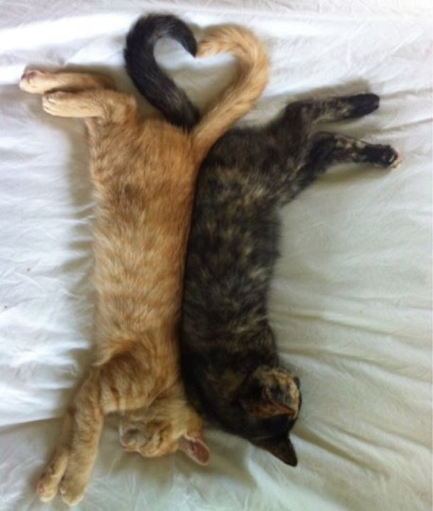 heart tails