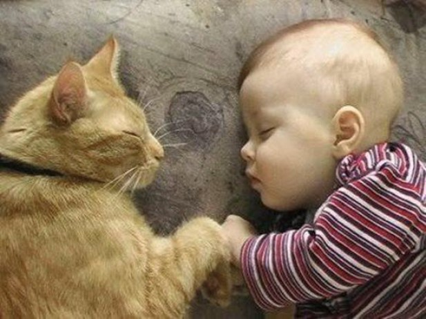 baby and ginger cat