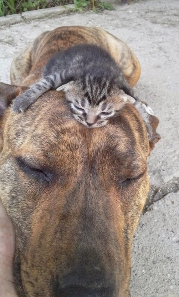 cat on dog copy