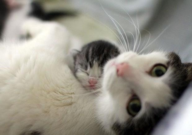 don't wake my baby
