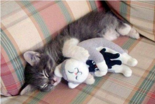 kitten cuddles toy