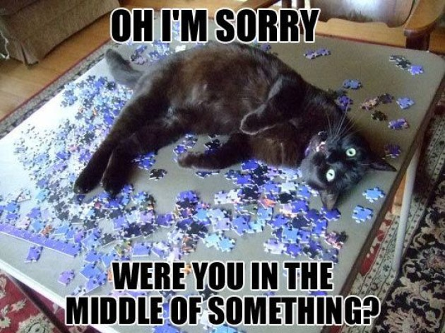 sorry cat jigsaw