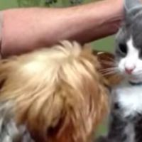 15 Cats Who Aren't Afraid Of Dogs