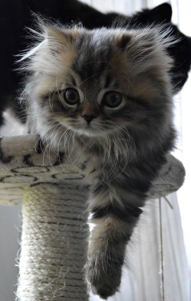 kitten on cat tree
