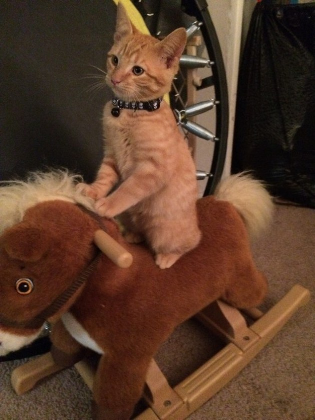 ride a cock horse