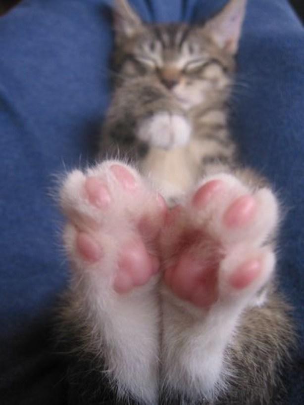beans 9
