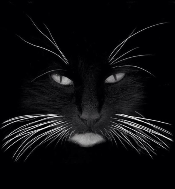 black whiskers 1