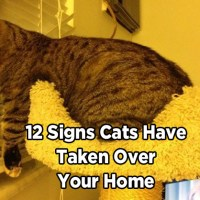 12 Signs Cats Have Taken Over Your Home