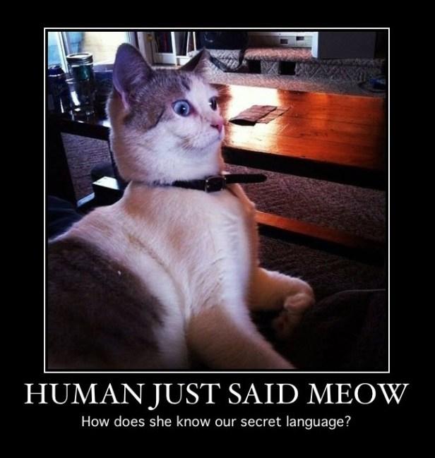 human said meow