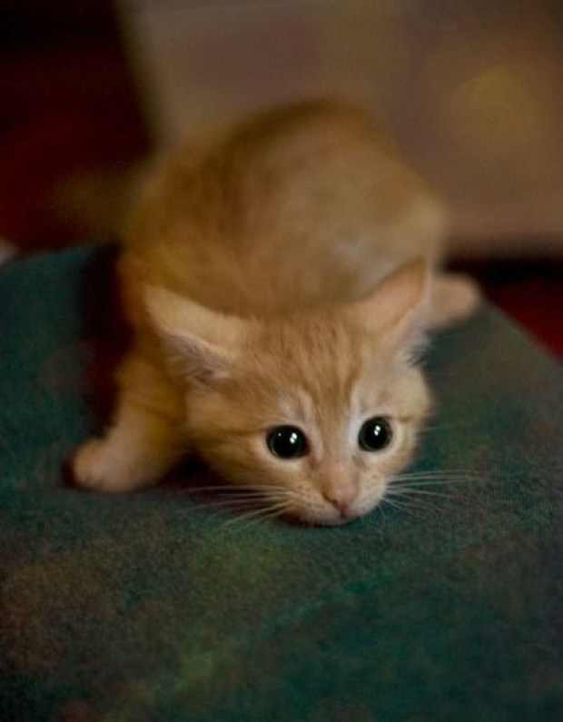 ready to pounce
