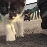 Cute Stray Kitten Follows Us Around