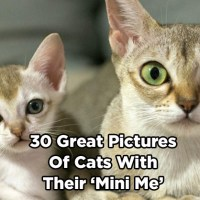 30 Great Pictures of Cats with Their 'Mini Me'