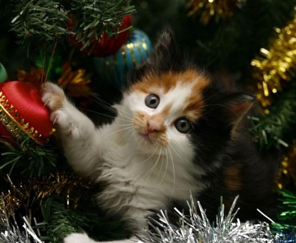 xmas kitten 2