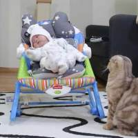 5 Cats First Encounter With a Baby