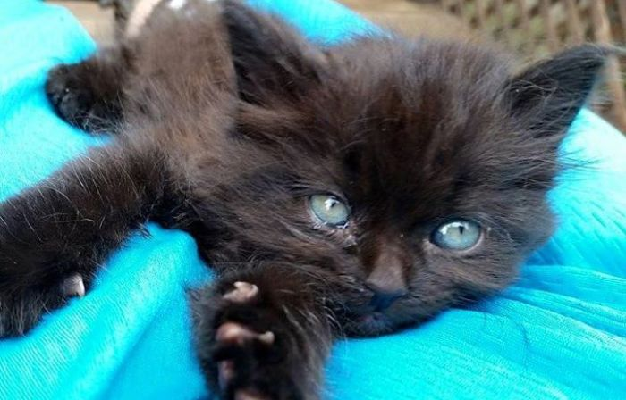 beaut kitten