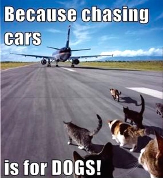 chasing cars lol