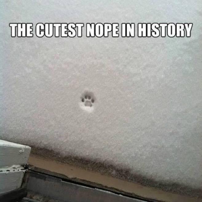 cutest nope