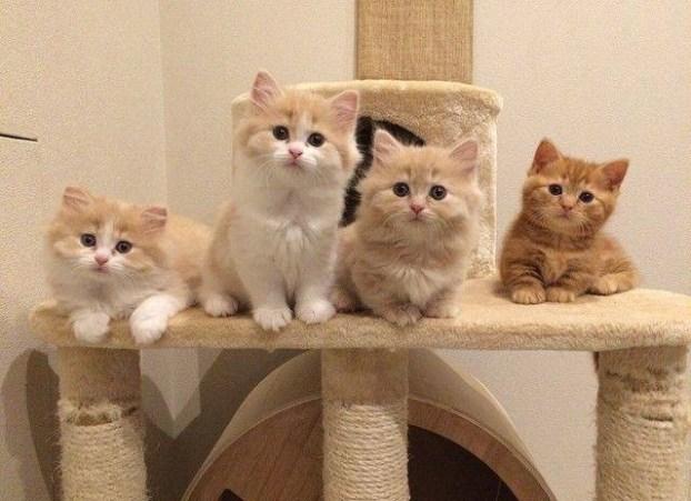 4 kittens on cat tree