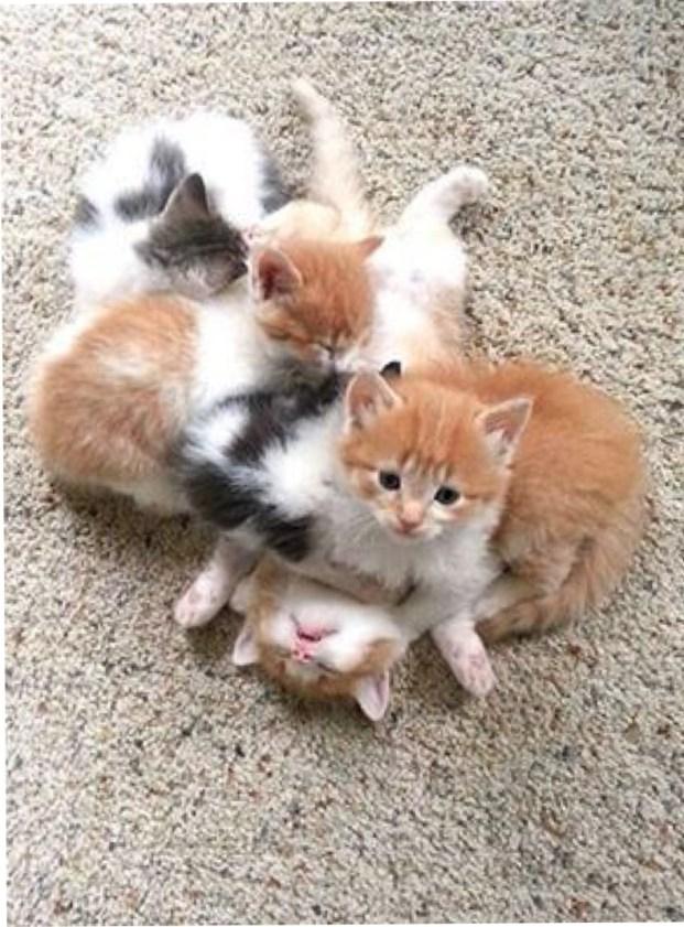 bundle of kittens