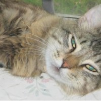 Loyal Cat Breaks Out of Shelter to Find His Forever Family