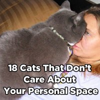 18 Cats That Don't Care About Your Personal Space