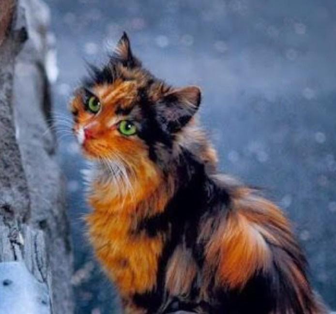 stunning calico