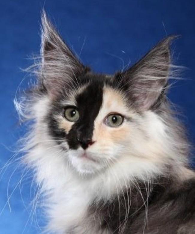 amazing ears