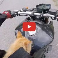 Ginger Kitten Found By Motorcyclist on a Deserted Mountain Road