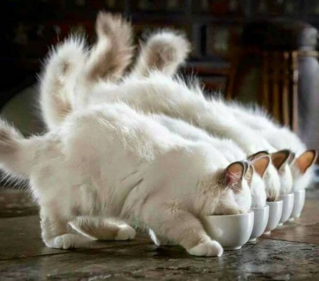 Synchronicity...