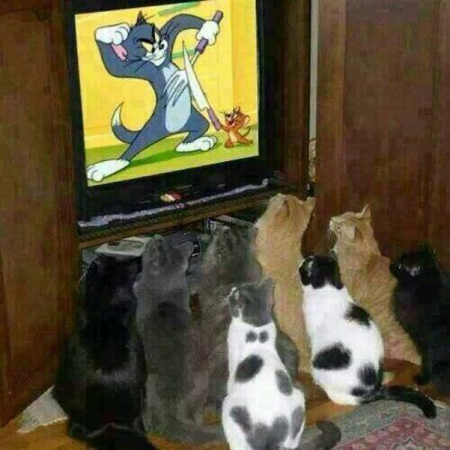 watch telly
