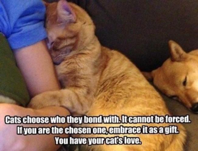 cats choose