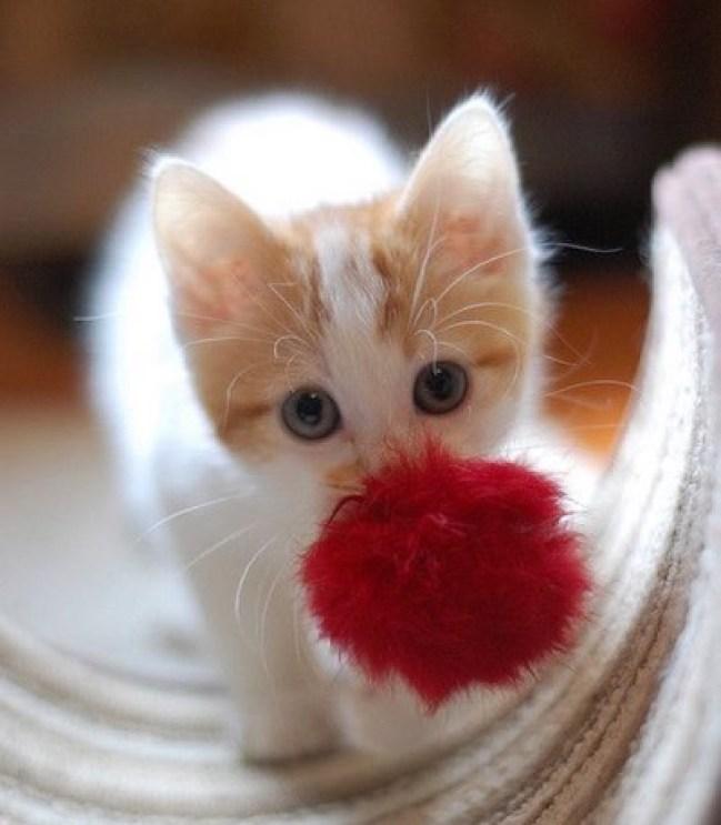 cutie pompom