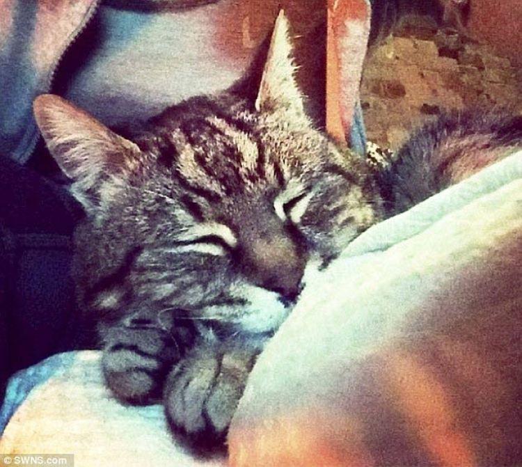 mummy-cat-2
