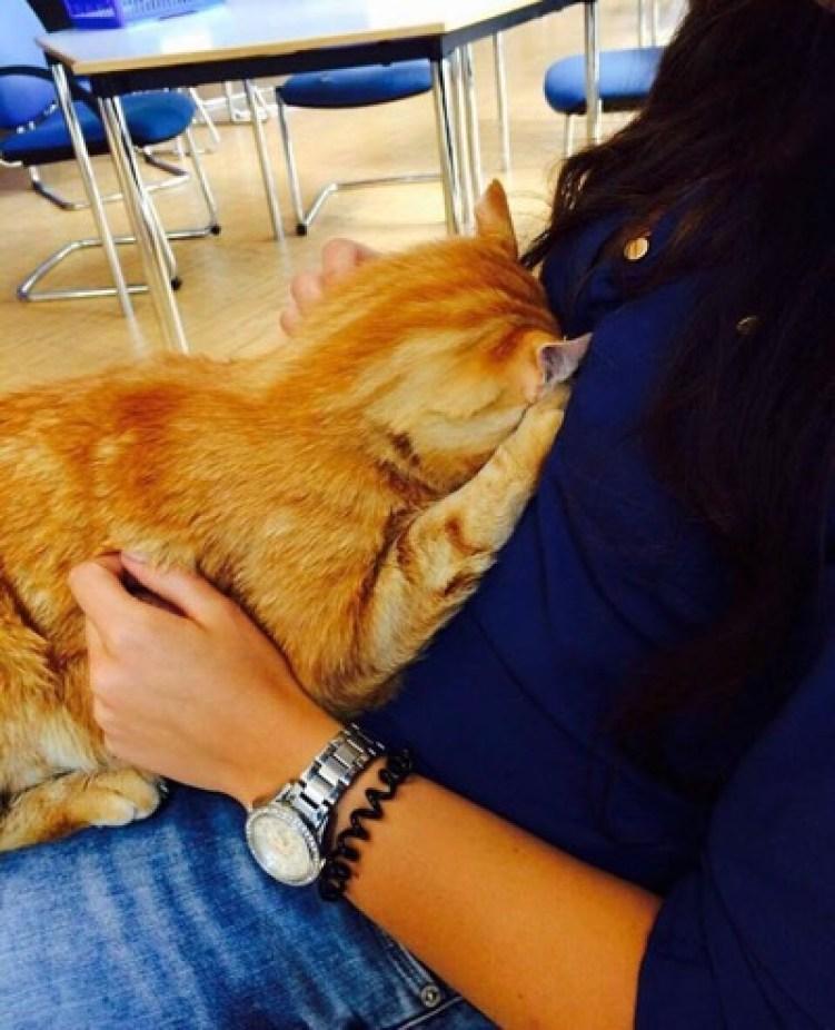 uni cat 3