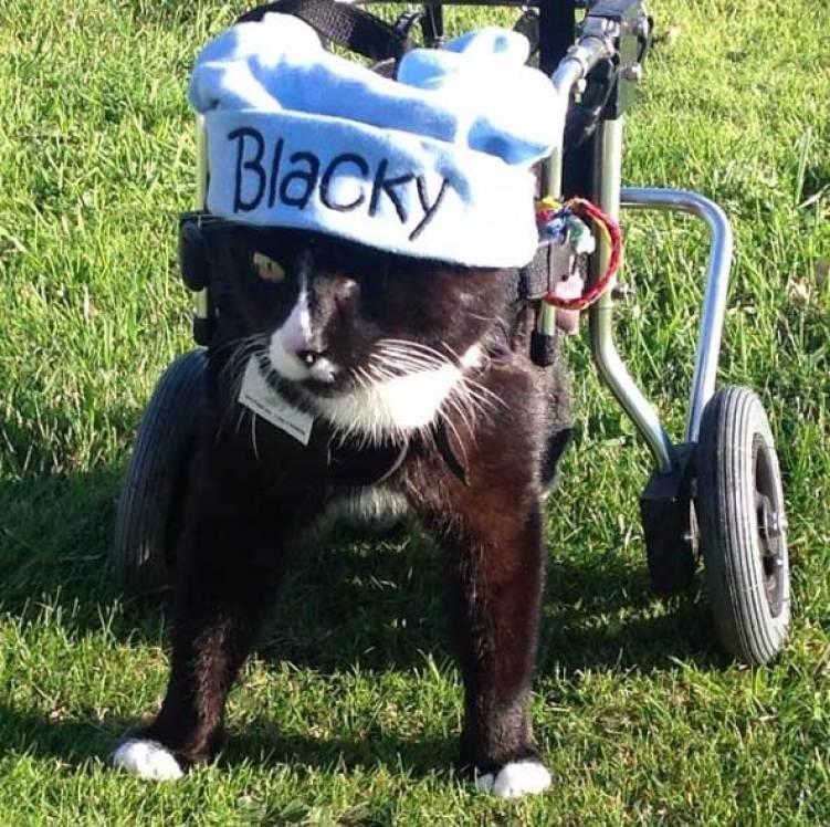 blacky 6