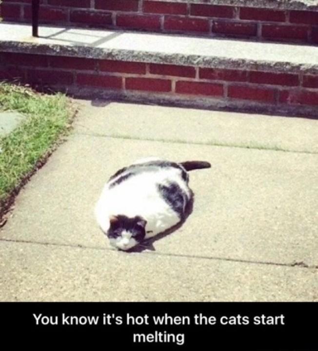 melting cat lol