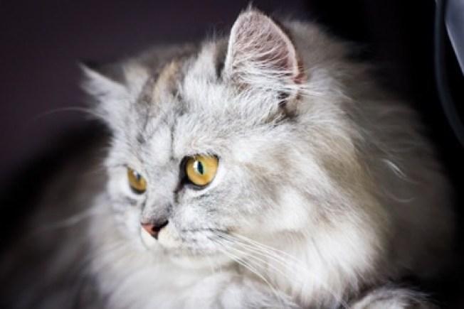 stunning yellow eyes