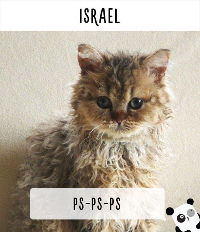 call cat 4